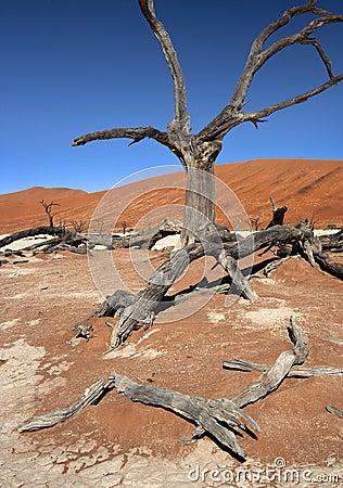 Dead Vlei salt pan - Namibia