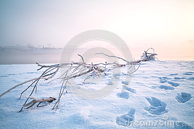 Dead wood on snow
