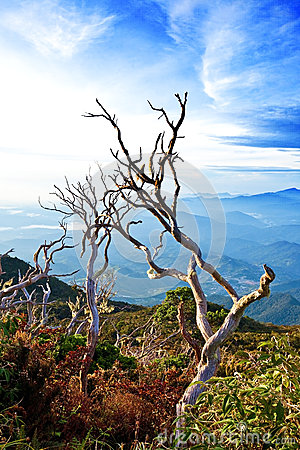 Dead wood up Mount Kinabalu, Sabah, Malaysia