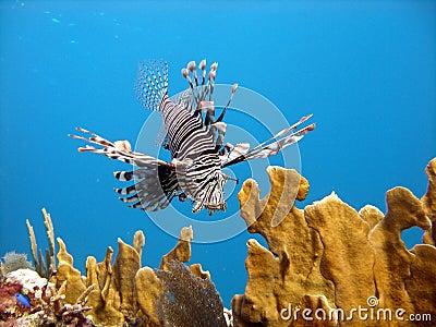 Deadly fisklionrovdjur