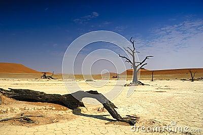 Deadvlei (Namib desert)