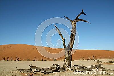 Deadvlei in Namibian desert