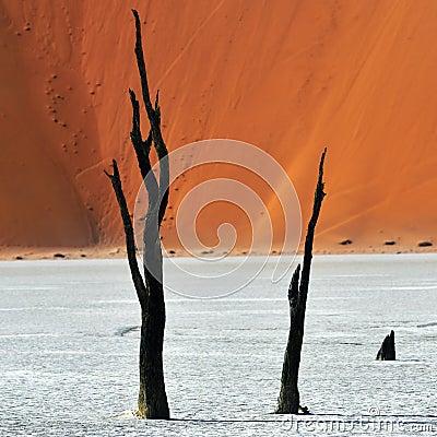 Free Deadvlei, Sossusvlei. Namibia Stock Photography - 66902342