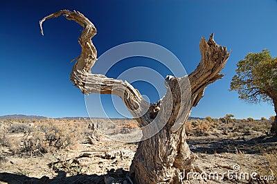 Deadwood in the blue sky