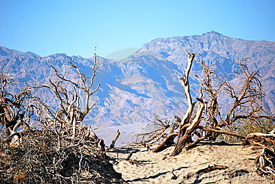 Royalty Free Stock Image: Deadwood and desert. Image: 19680296