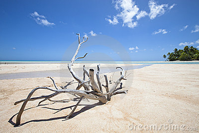 Deadwood on white sand beach