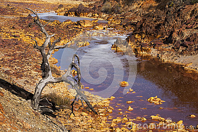 Death and desolation in the Tinto River