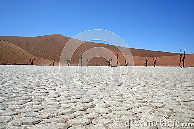 Death in the Namib Desert