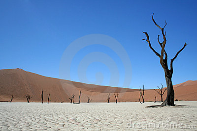Death in the Namib Desert