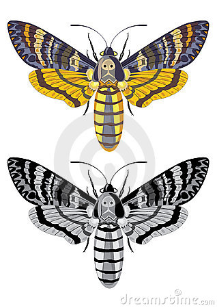 Free Death S Head Hawk Moth Stock Image - 5049171