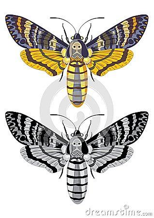 Death s head hawk moth