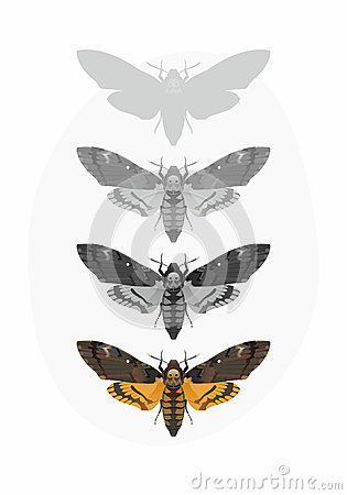 Free Deaths-head Hawk Moth Set (Acherontia Atropos) Stock Images - 52024104