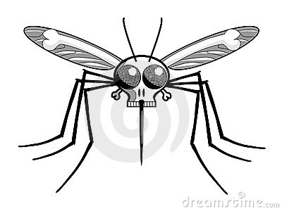 Deaths Head Mosquito : Dreamstime