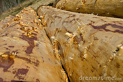 Debarked logs drying