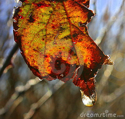 Free Decaying Leaf Royalty Free Stock Photos - 8383488
