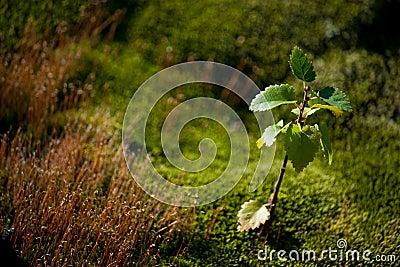 Deciduous broad-leaved tree