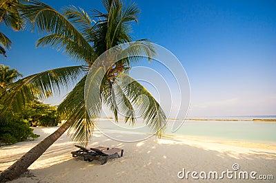 Deck chair under a palm-tree