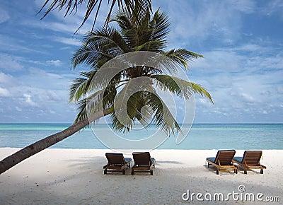 Deck chair under a palm-tree on a tropical beach