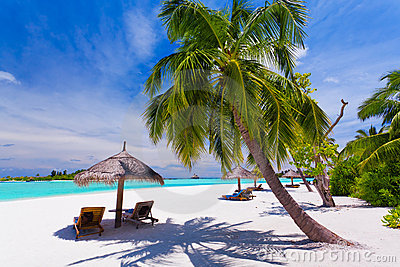 Deck chairs under palm trees on a tropical beach