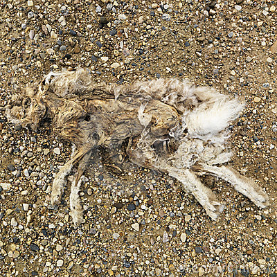 Decomposed rabbit.