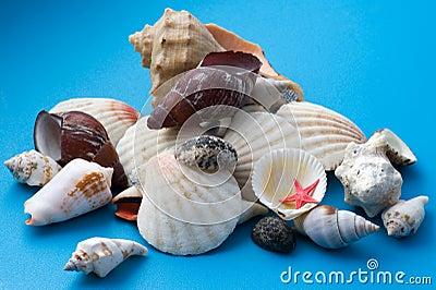 Decor seashell on blue close up Stock Photo
