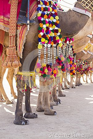 Free Decorated Camel At Desert Festival In Jaisalmer, India. Camel`s Feet Close Up Royalty Free Stock Photos - 99750358