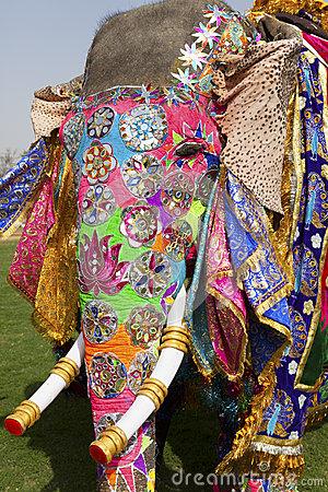 The decorated elephant.
