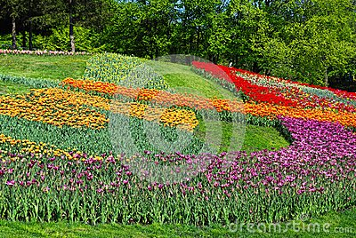 Decorated lawn with multicolored tulips