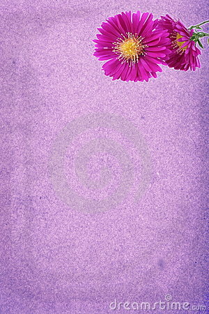 Decorated Paper With Purple Daisy Stock Image - Image: 6736651