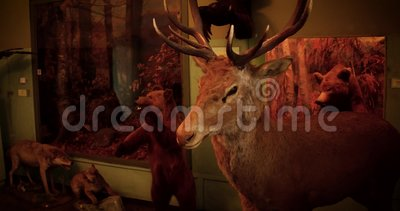 Decoratieve eigenschap - gevuld hertenhoofd op rode bakstenen muur stock footage