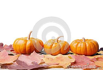 Decoratieve pompoenen