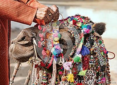 Decoration camel at the Pushkar Fair