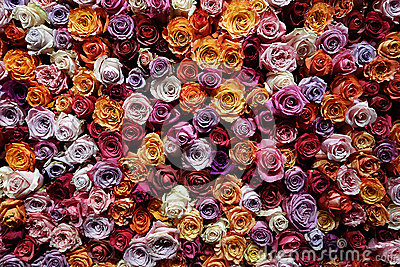 Countless roses