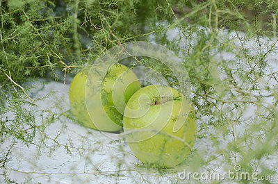 Decoration with green apples and asparagus on white background