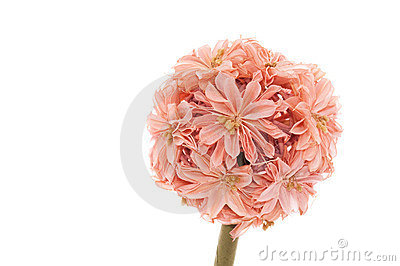 Decorative Artificial Flower