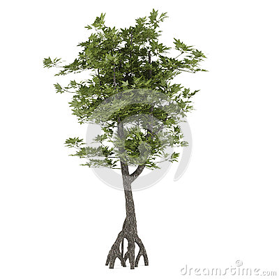 Decorative bush tree