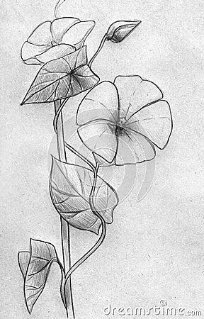 Decorative creeping plant