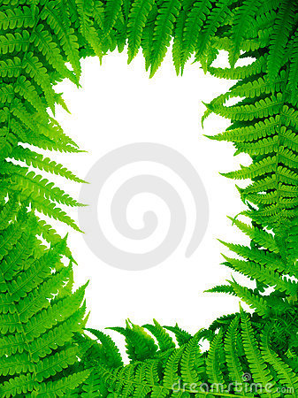 Free Decorative Floral Fern Frame Stock Image - 2524231