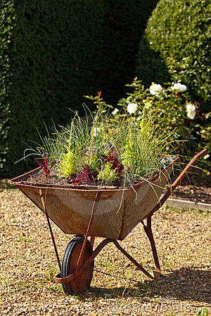 Decorative garden wheelbarrow with culinary herbs
