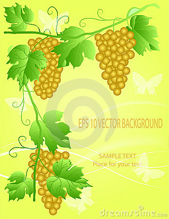 Decorative grape illustration