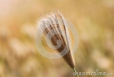 Decorative grass