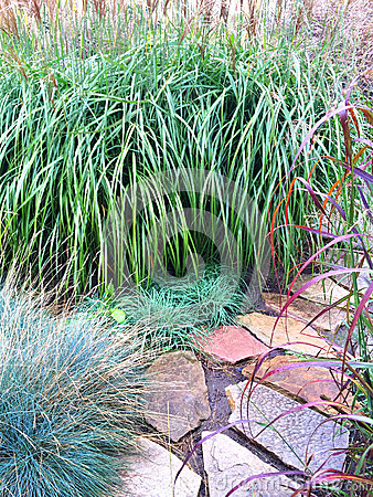 Free Decorative Grass And Stone Path In The Garden Stock Images - 54701774
