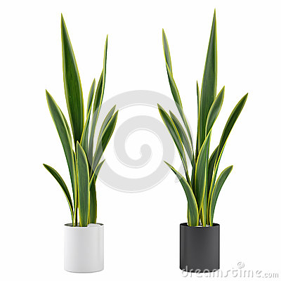 Decorative grass plant in flowerpot
