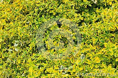 Decorative maple leafs background