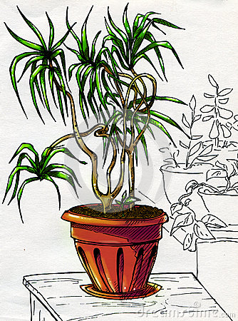 Decorative palm tree in red pot