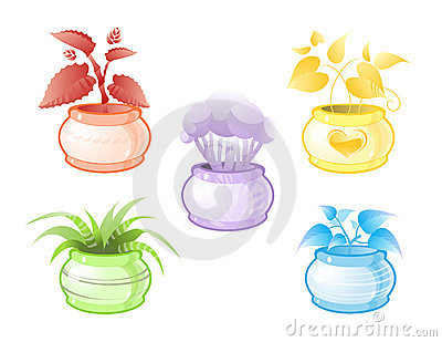 Decorative pot plants