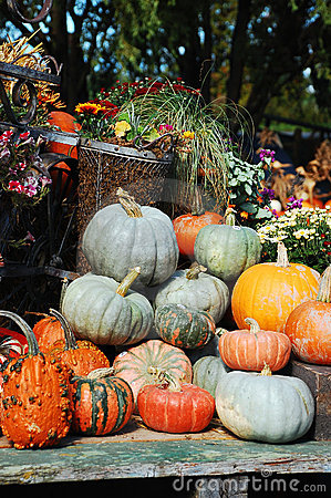 Decorative pumpkins and flowers