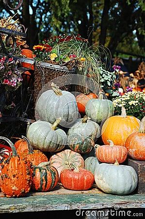 Decorative pumpkins and flowers