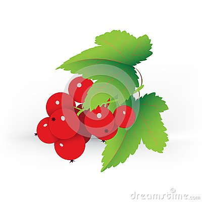 Decorative red currant