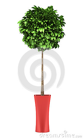 Decorative round tree in red pot isolated on white
